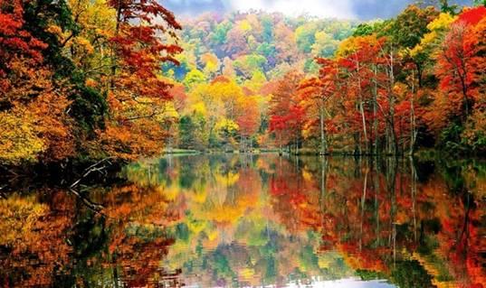 Anna autumn pic